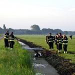 GB 20140707 001 Koe te water Lagedijk