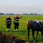 GB 20140707 009 Koe te water Lagedijk