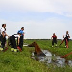 GB 20140719 001 Paard te water Inlaagpolder