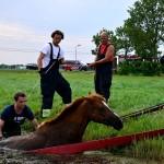GB 20140719 003 Paard te water Inlaagpolder