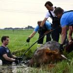 GB 20140719 007 Paard te water Inlaagpolder