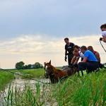 GB 20140719 013 Paard te water Inlaagpolder