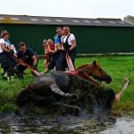 GB 20140719 015 Paard te water Inlaagpolder