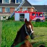 GB 20140803 001 Spaarndammerdijk paard te water