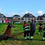 GB 20140803 004 Spaarndammerdijk paard te water