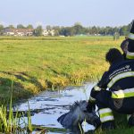 20161008-09u09-gb-003-dier-te-water-inlaagpolder-spd